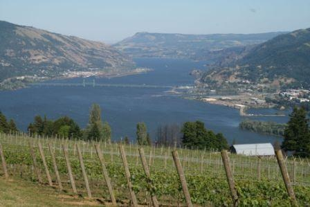 View of Columbia Gorge