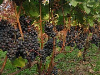Wineries4